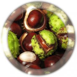 Каштан плоды 50 гр