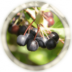 Арония черноплодная 100 гр