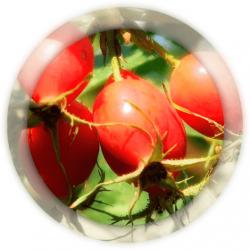 Шиповник плоды 100 гр