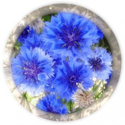 Василька синего цветки 25 гр